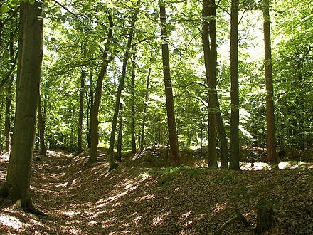 Austrocknung, Baumsterben, Burgwald, Klimaschutz, NAherholungsgebiet, Wasserhaushalt